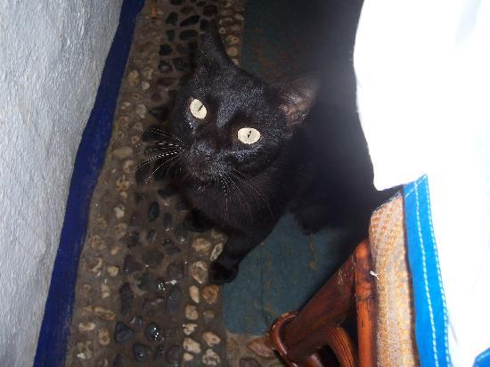 Parador Del Sol Acapulco: a nice kitty at the so called resort restaurant