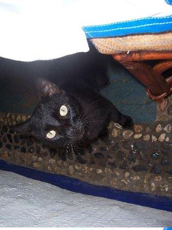 Parador Del Sol Acapulco: a nice kitty at the so called resort restaurant