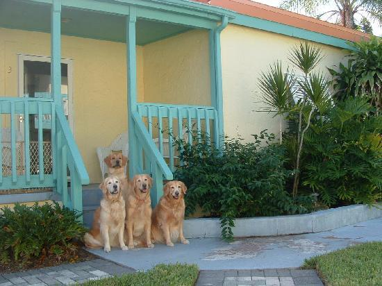 Island Paradise Cottages of Madeira Beach : Ready for a little fun-n-the sun!!!!