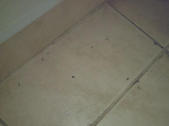 Inglewood Plaza Inn: Insects on the floor