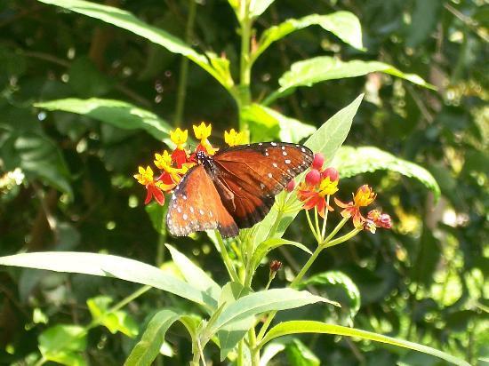 Fairchild Tropical Botanic Garden: butterfly section