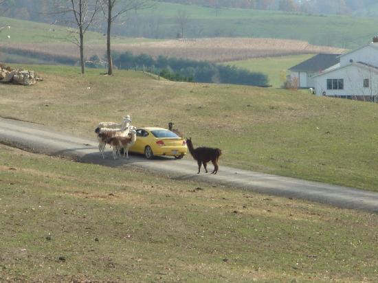 The Farm at Walnut Creek: Drive Through Tour