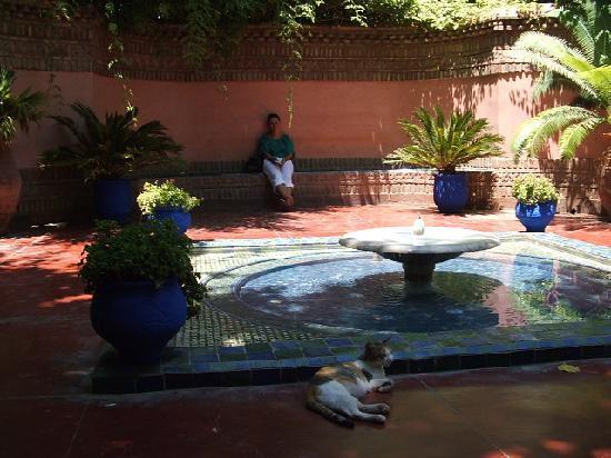 Jnan El Harti: Majorelle Gardens