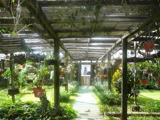 Duck Inn And Orchid Garden: the orchid garden