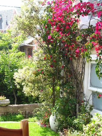 Bay Tree House: Bay Tree Rose Garden
