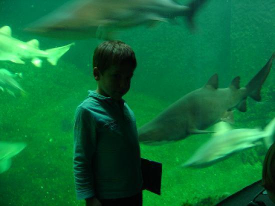 Boulogne-sur-Mer, Francia: nagez avec les requin