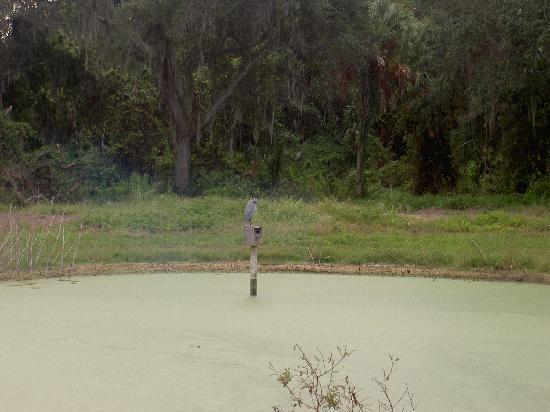 Palmetto, FL: heron