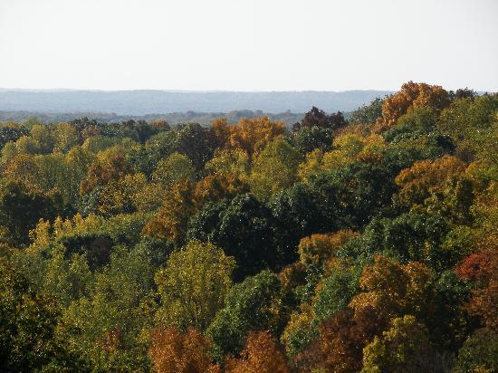 Nashville, IN: Fall colors