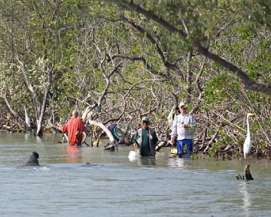 Sebastian Inlet State Recreation Area: manatees examining the fisherman