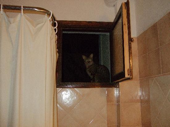 Sunrise Hotel: Cat at bathroom window