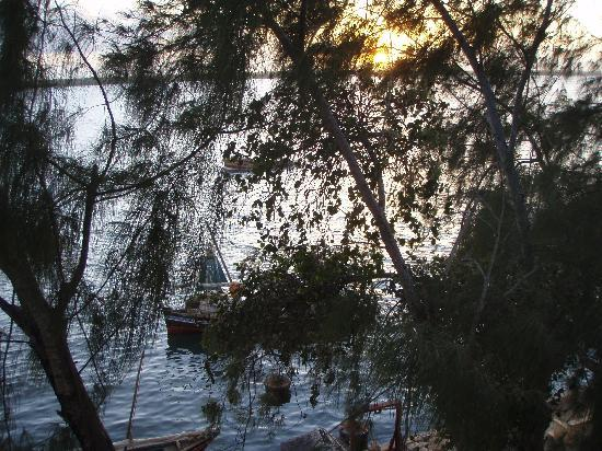 Casuarina Rest House: Lamu sunrise through the casuarina trees