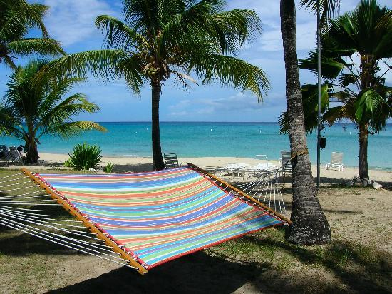 Cottages By The Sea: the hammock makes a great place for star-gazing