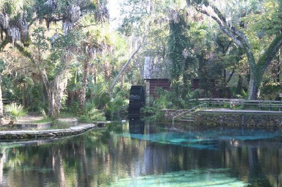 Silver Springs, FL: Juniper Springs RA- blue hole / swimming area
