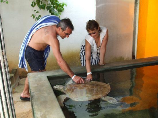 Wunderbar Beach Club Hotel: An adult turtle