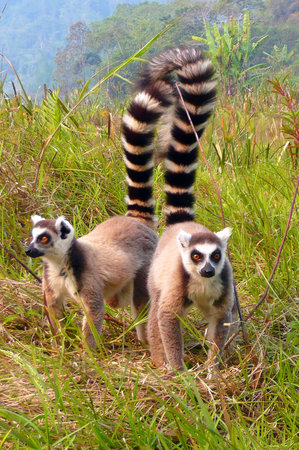 Andasibe-Mantadia National Park - Reserve of Perinet