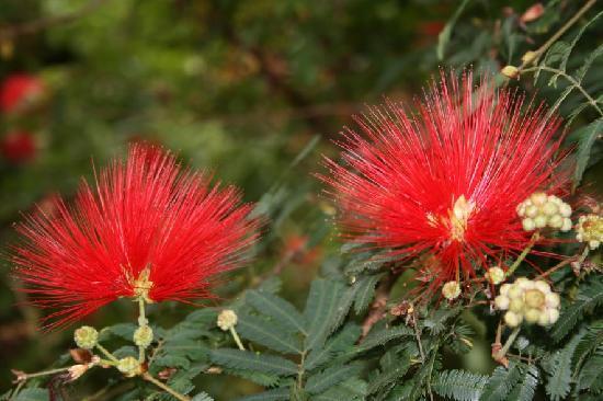 Madeira Botanical Garden : Stunning flowers
