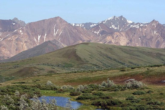 Parc national et réserve de Denali, AK : Beauty of the tundra in Denali