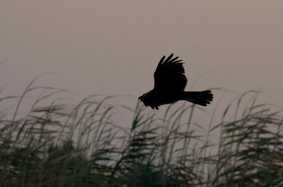 Azraq Lodge: birds in Azraq