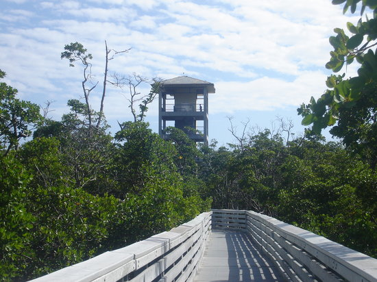 Anne Kolb Nature Center: Observation tower--elevator available!