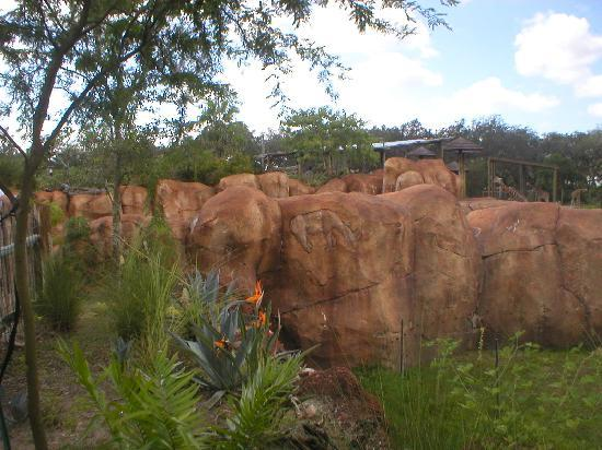 Tampa's Lowry Park Zoo: Rhino carving in rocks