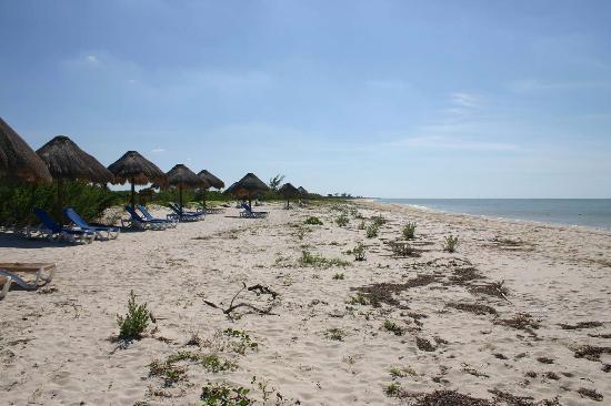 Celestun, Meksiko: Eco Paraiso Beach