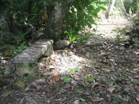 Mutalau, Niue: Track to Fupiu