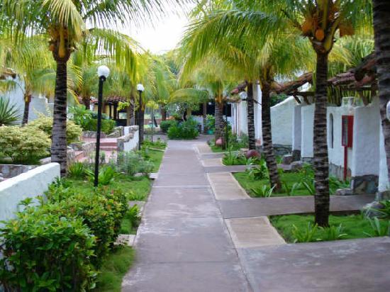 Tropical Refuge : hotel