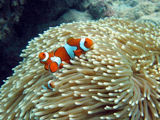 Cairns, Australia: I found Nemo.