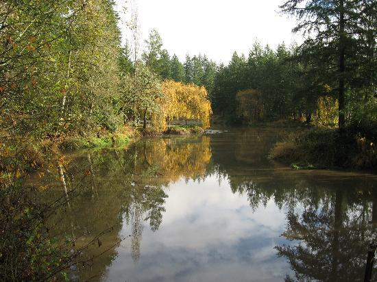 Brookside Inn on Abbey Road: The serene pond on the grounds