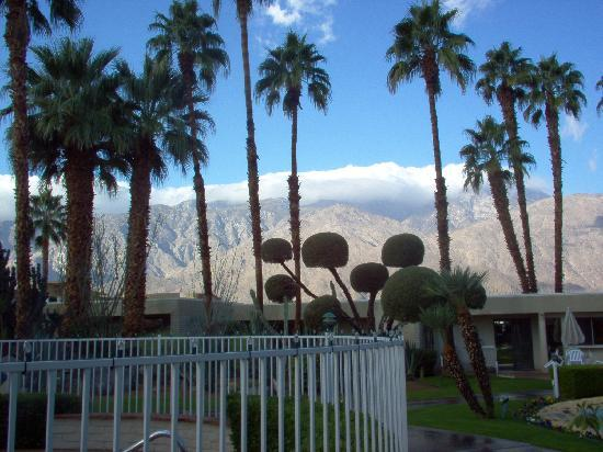 Desert Isle of Palm Springs: landscaping