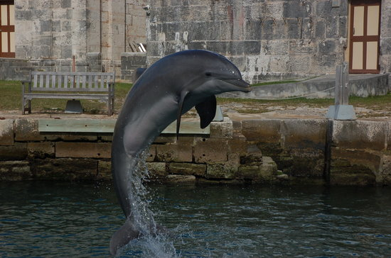 Dolphin Quest: Beautiful