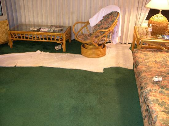 Wet Emerald Green Carpet W Mgmt Solution Picture Of