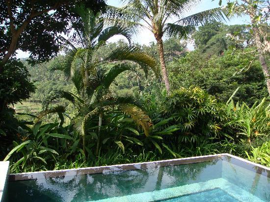 Four Seasons Resort Bali at Sayan: view from our villa