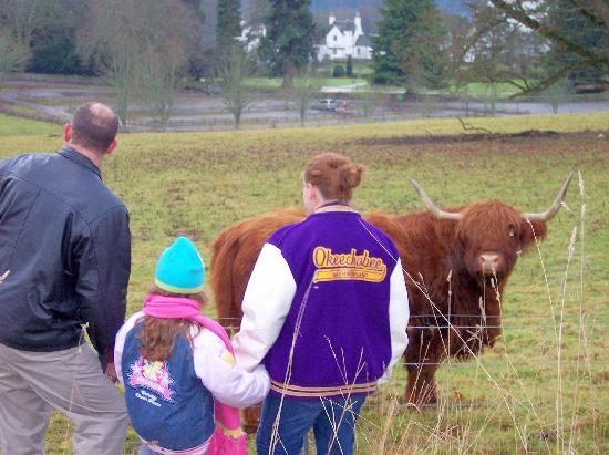 Blair Castle and Hercules Gardens: the cow