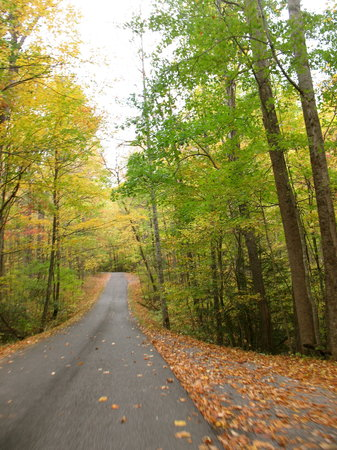 Roaring Fork Motor Nature Trail: road