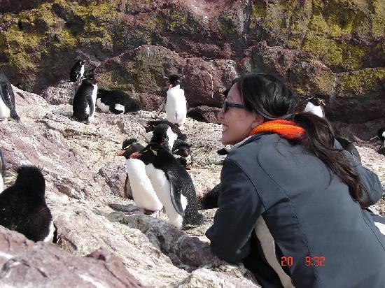 Puerto Deseado, Arjantin: Rockhopper penguins sighting