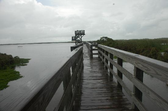 Leonabelle Turnbull Birding Center: Boardwalk and viewing tower at the birding center.