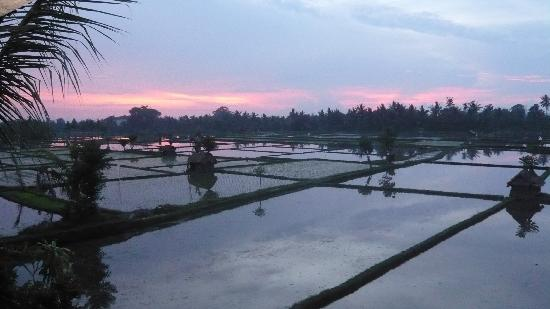 Tegal Sari: Sunset overlooking the padi fields from the terrace