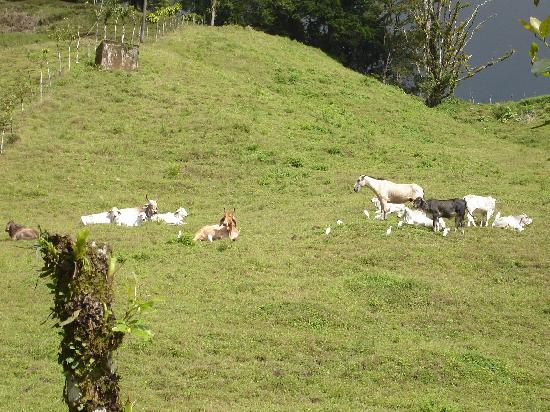 Lost Iguana Resort & Spa: Neighboring Farm