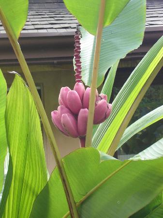 Lost Iguana Resort & Spa: More Flowers