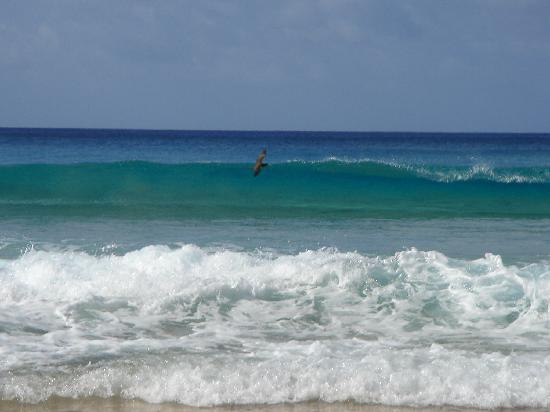 Pousada Solar de Loronha : one of Noronha's amazing beaches