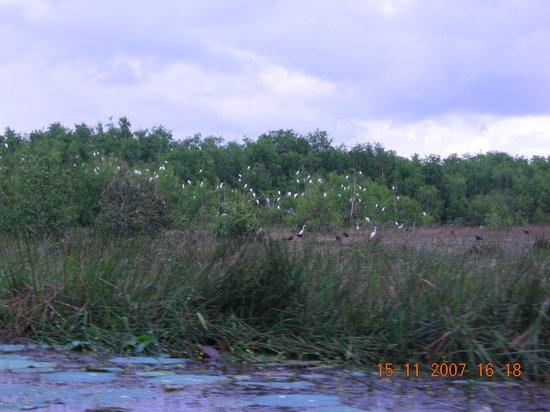 Tra Su Bird Sanctuary