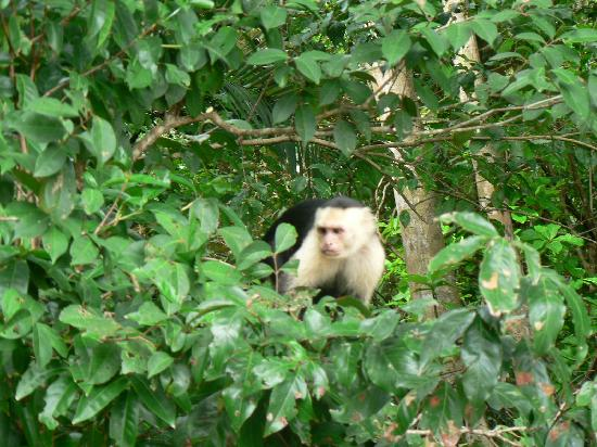 Issimo Suites Boutique Hotel and Spa: monkey's