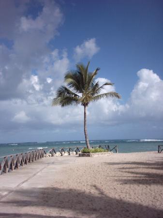 Grand Paradise Playa Dorada: meine palme