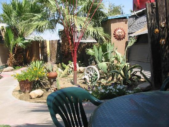 . Red Ocotillo: patio