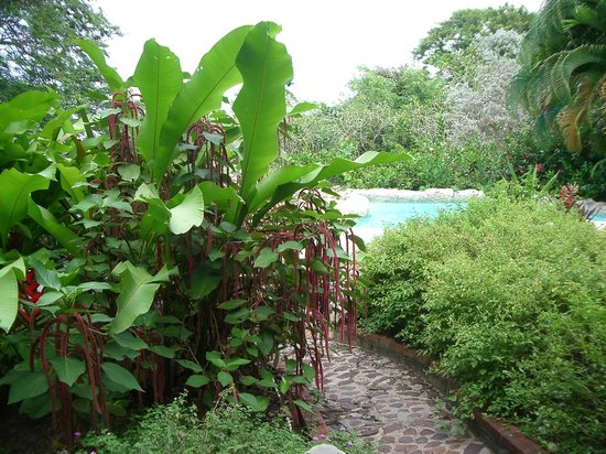 Bathsheba, باربادوس: Andromeda Botanic Gardens