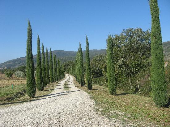 Casa Portagioia - Tuscany Bed and Breakfast: Entrance Drive