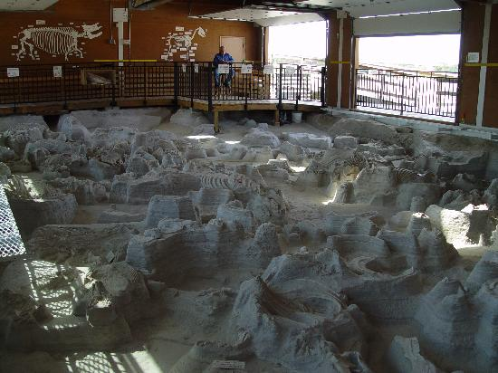 Royal, NE: Excavated preserved remains in Rhino Barn