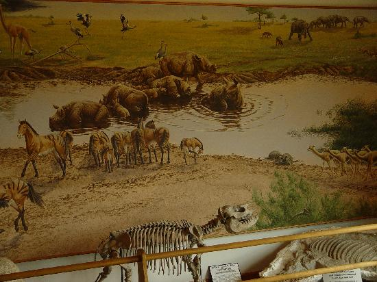 Royal, NE: Rhino Skeleton & Mural Depicting How AshFall Pit  Looked Pre Volcanic Ash
