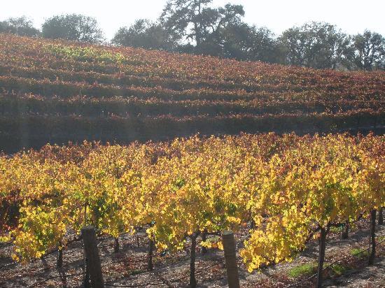 Courtyard Paso Robles: Opolo vineyard